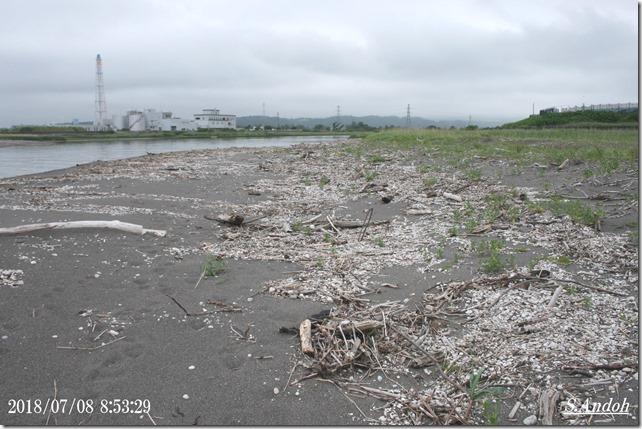 13長流川河口の軽石