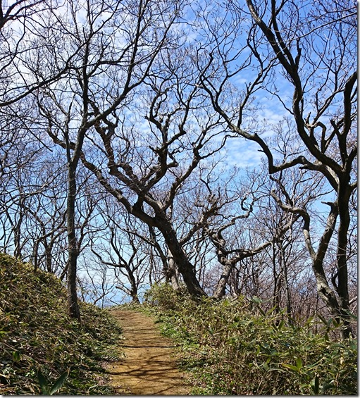 49地球岬 散策路 針葉樹無し