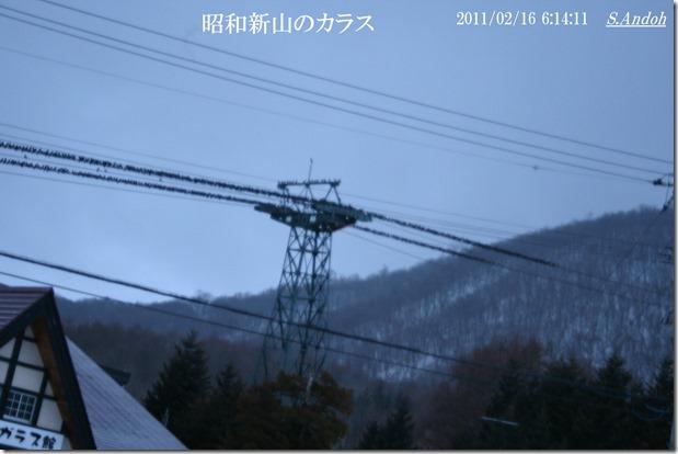 14昭和新山のカラスたち