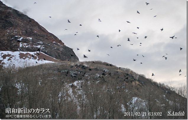 15昭和新山のカラス