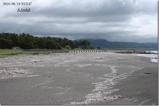 75堆積が進む海岸線